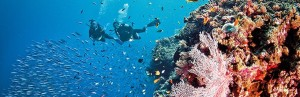 Great Barrier Reef Diving 1