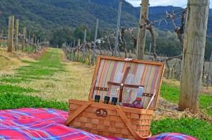 aussie-wine-picnic