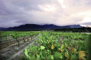 aussie-wineyards-1